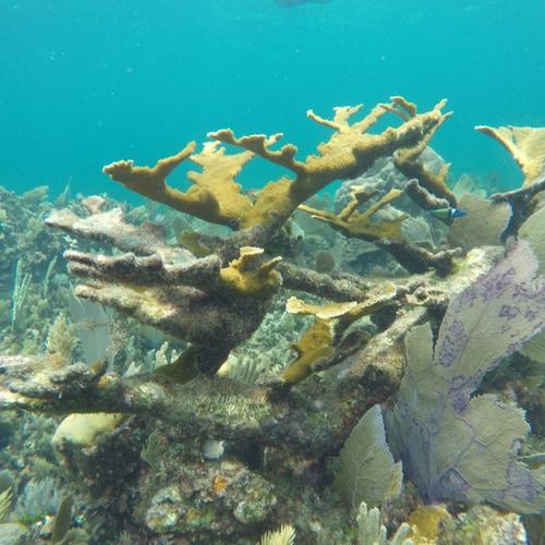 Enjoy the marine life
